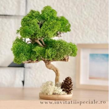 Copacel Decor Licheni Stabilizati